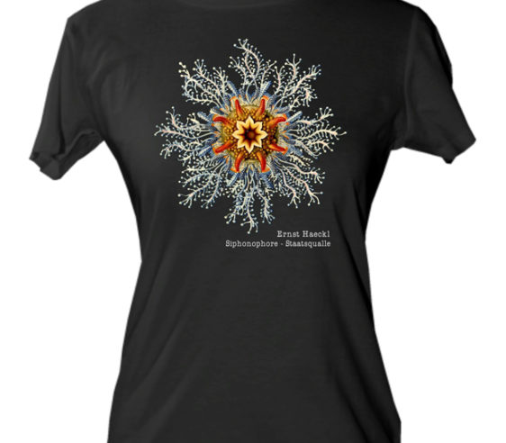 Haeckl - Siphonphore / Staatsqualle