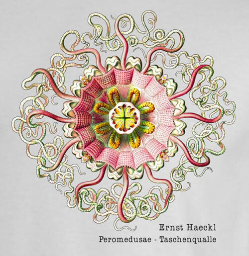 Haeckl – Peromedusae Taschenqualle
